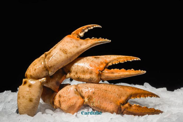 Bocas de cangrejo cocidas